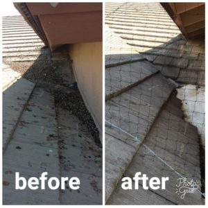 bird-netting-before-and-after